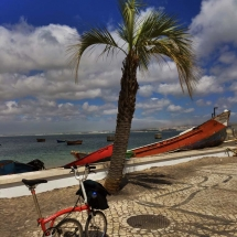 Bike and palm tree Trafaria Almada