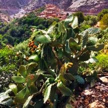 cactus-and-berber-village