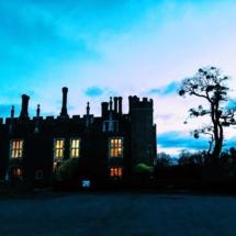 Hampton Court Tree2