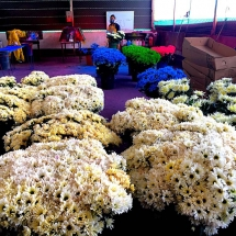 Bacata Finca Spraying Flowers