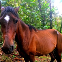Horse in jungle