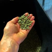 Jardin Beans Pre Roast