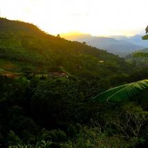 Jardin Coffee Fields at Sunset