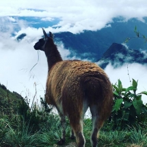 Llama in Town in the Clouds