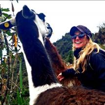 Llamas on trail