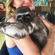 Sloth Pablito up close