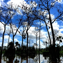 Stick tree reflections